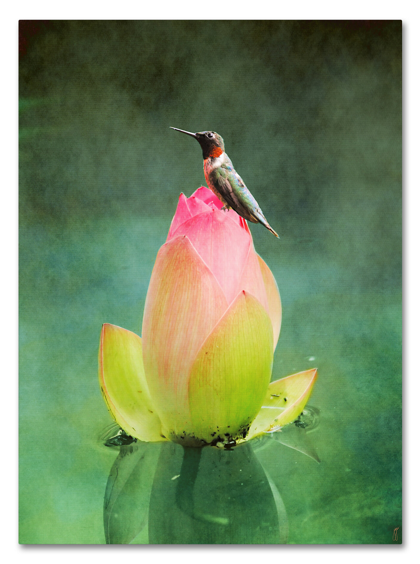 Hummingbird And The Lotus Flower Graphic Art Print On Wrapped Canvas