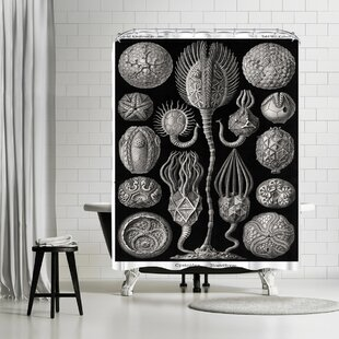 Adams Ale Haeckel Plate Single Shower Curtain