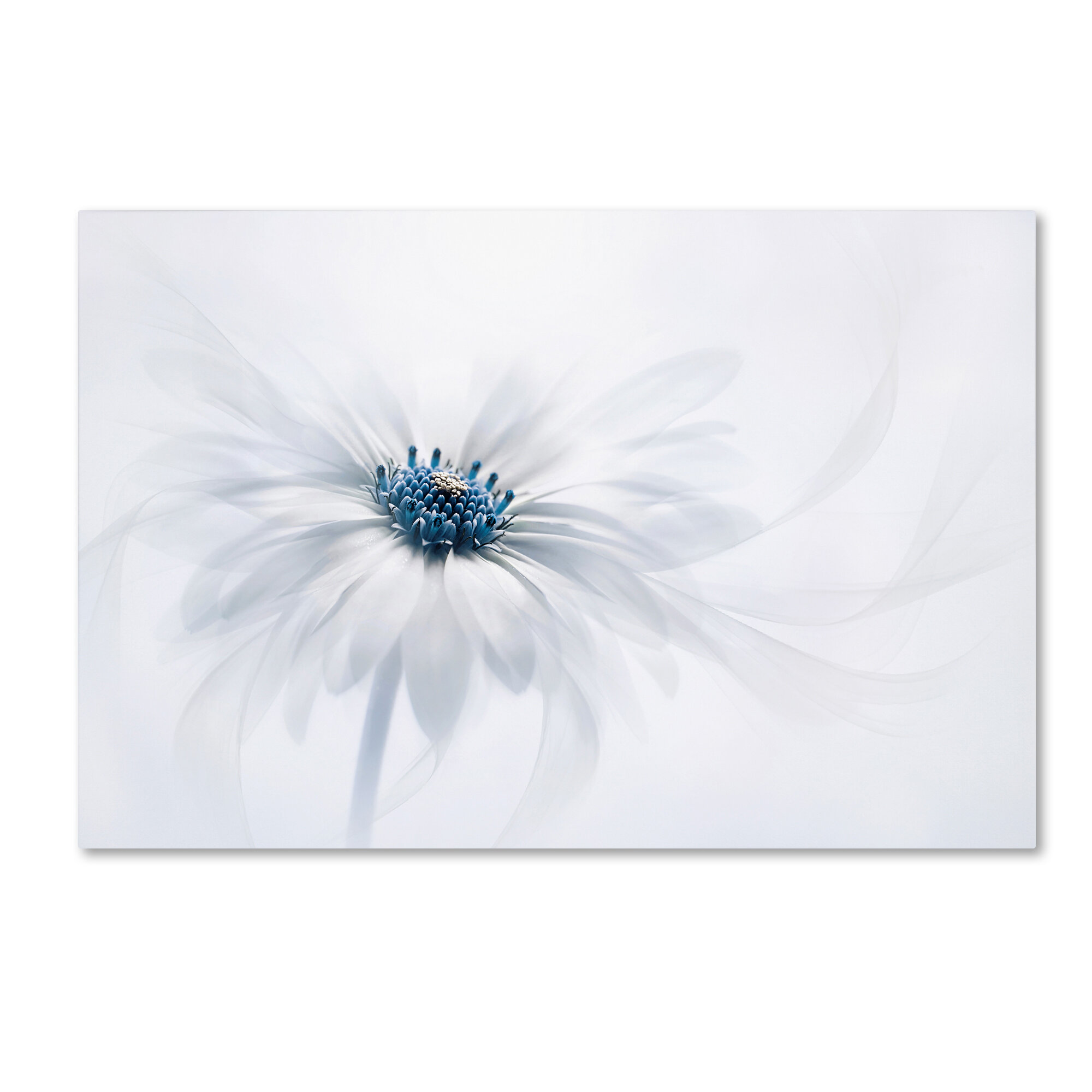 Spa Rock Stone Daisy Flower CANVAS WALL ART DECO LARGE READY TO HANG all sizes