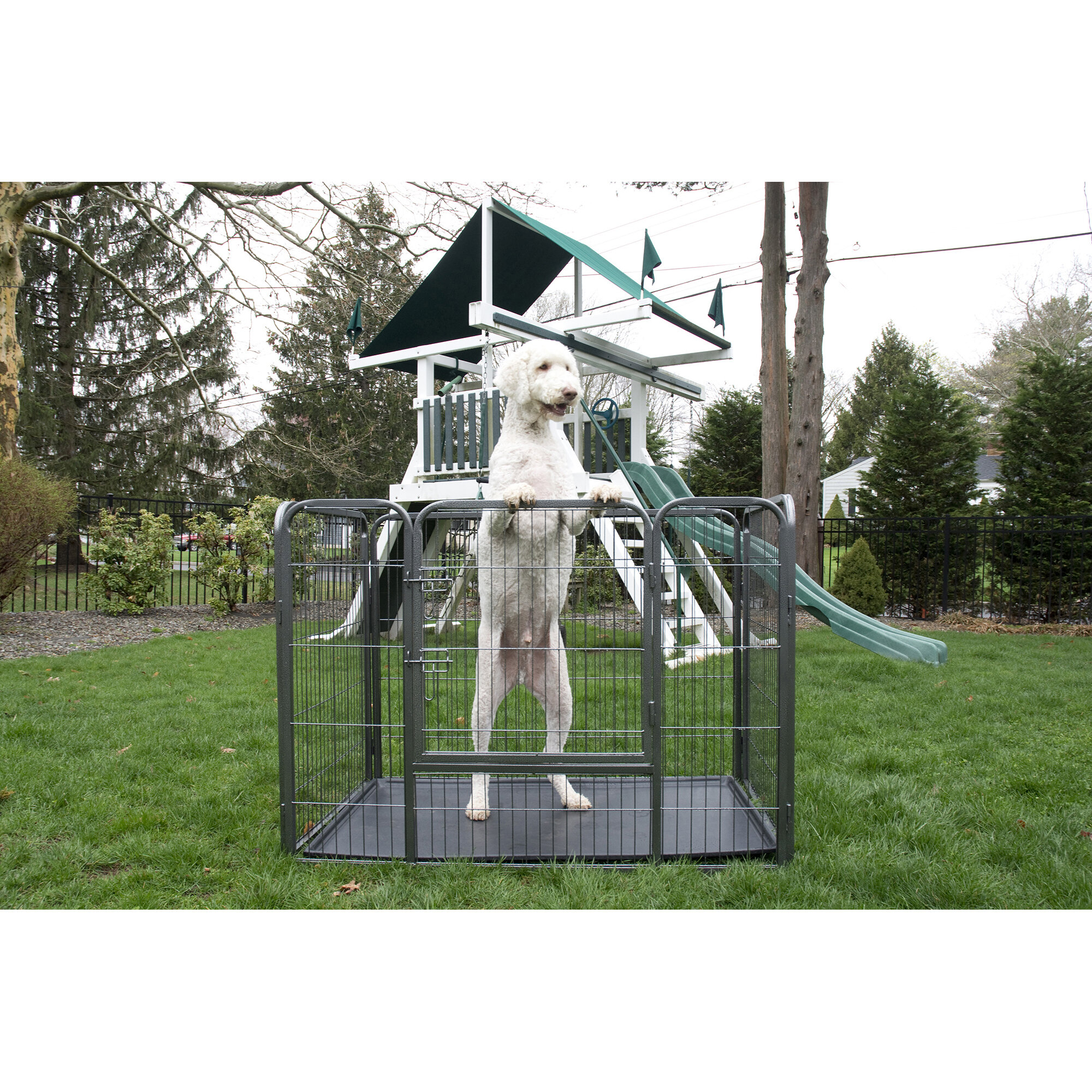 Safety & Security for your Pet