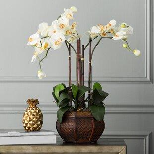 Orchids Floral Arrangement in Decorative Vase