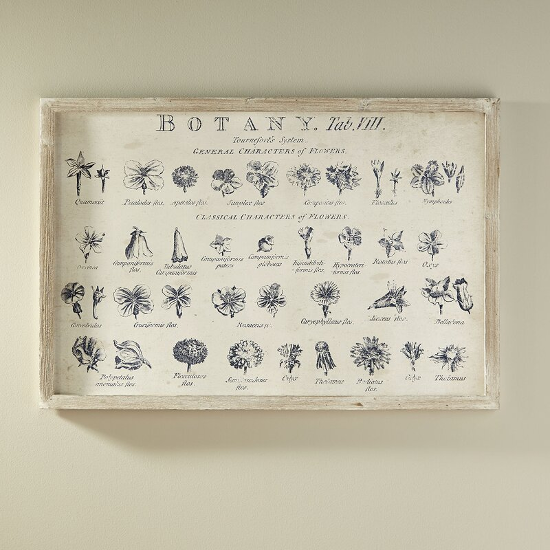 botany textbook graphic art print on wood joss main