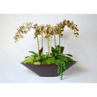 T&C Floral Company Orchid in Metal Boat Color: Green