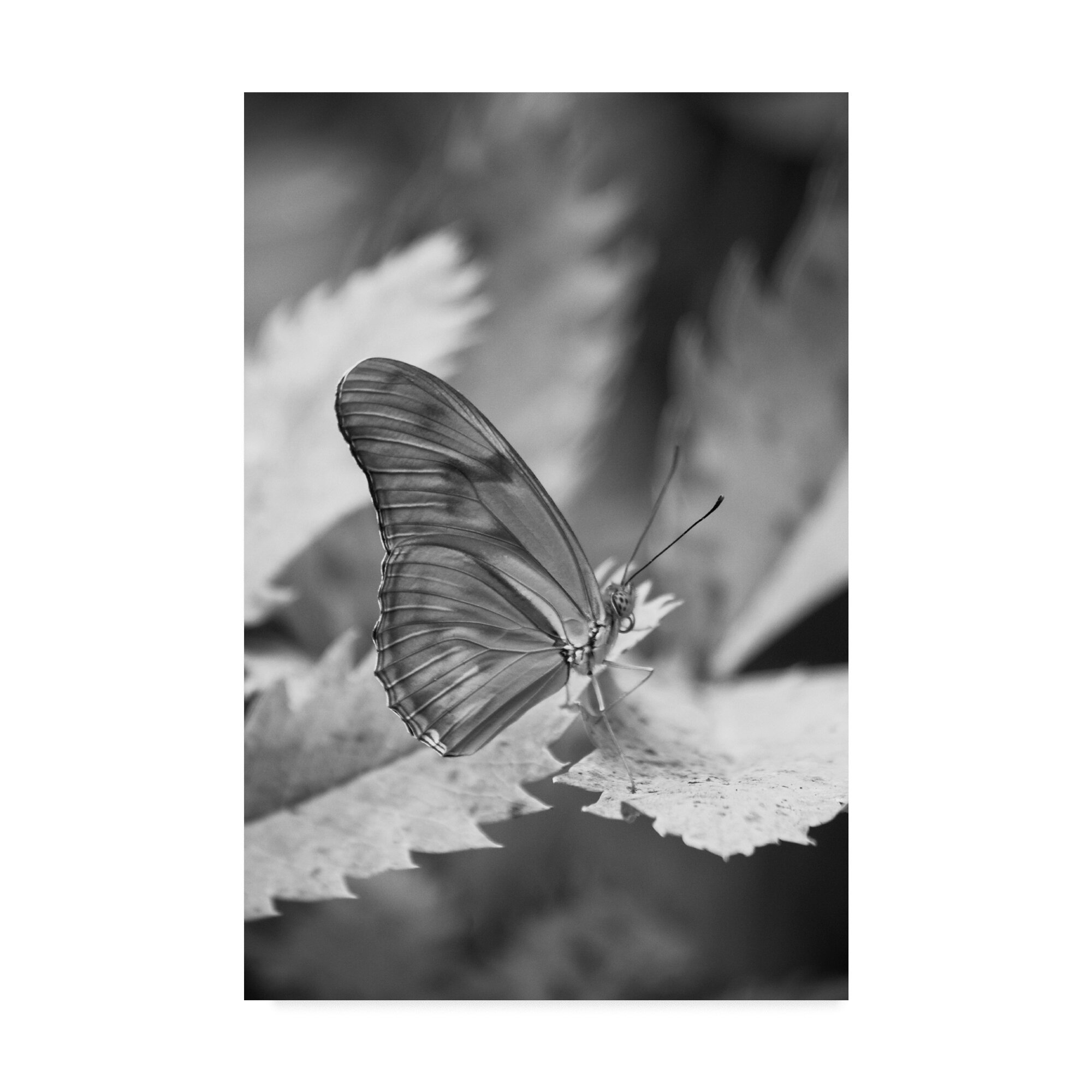 August Grove Still Butterfly Photographic Print On Wrapped Canvas Wayfair