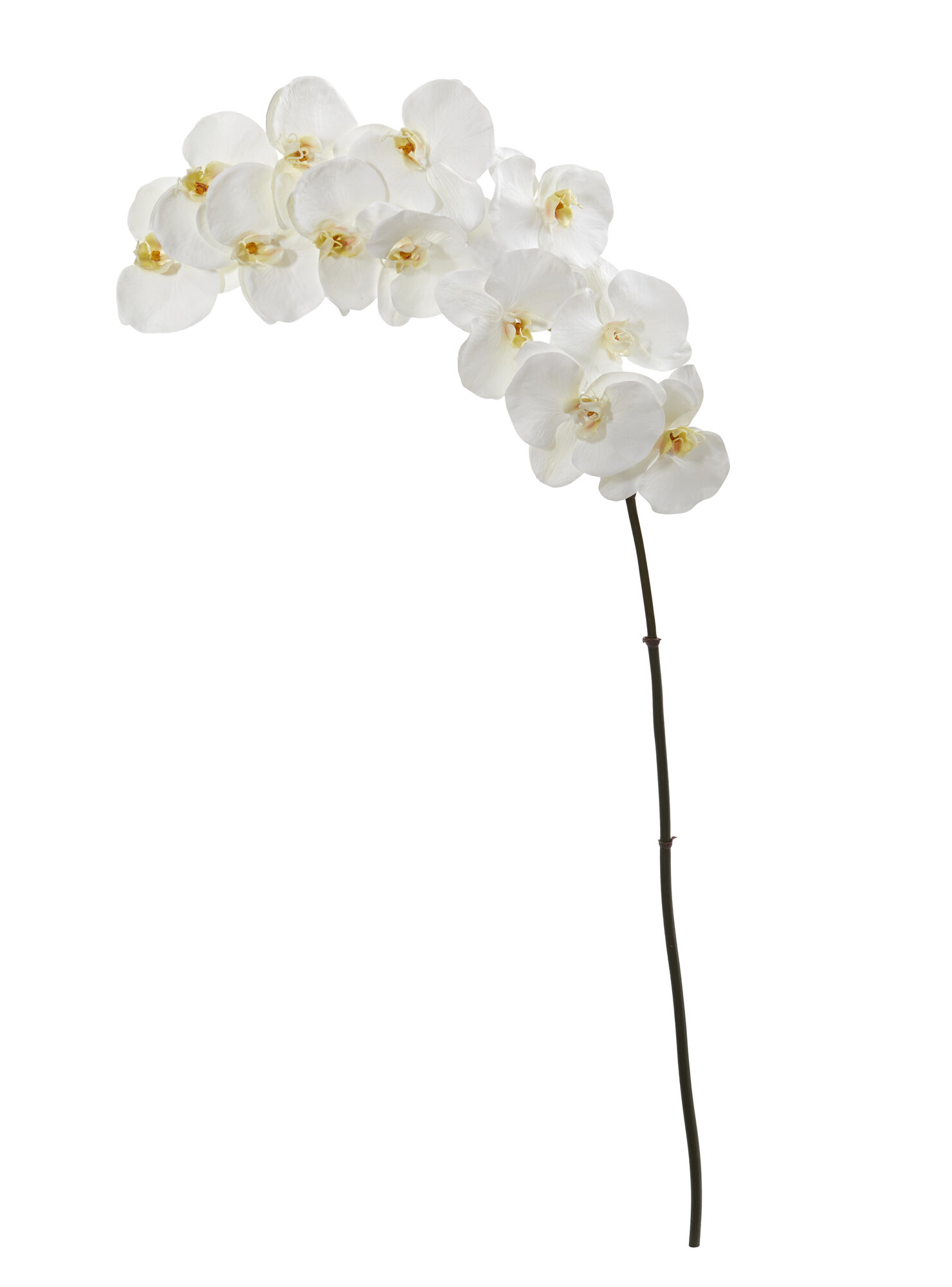 Bay Isle Home Phalaenopsis Artificial Orchid Stem Wayfair