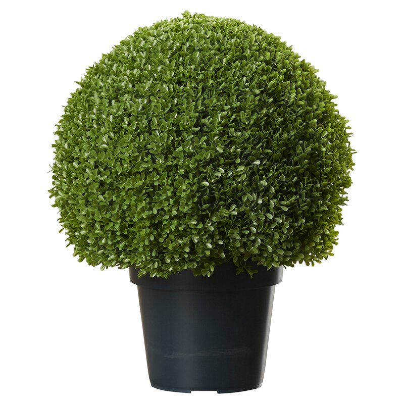 Faux Round Boxwood Topiary in Pot & Reviews | Joss & Main