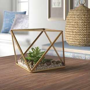 Table Terrarium Wayfair