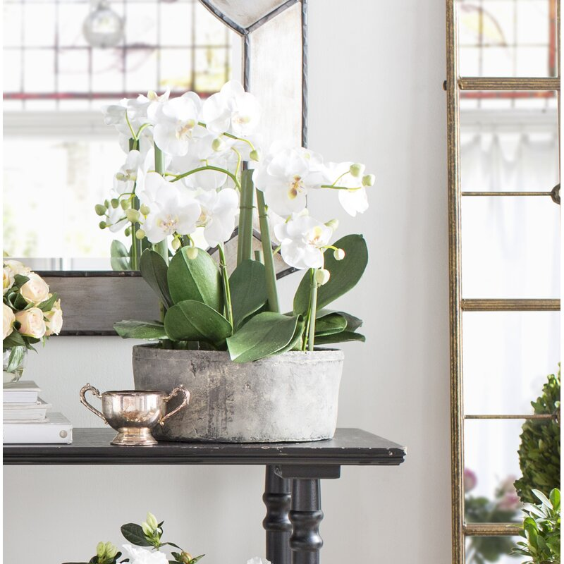 Phalaenopsis Orchid Floral Arrangements in Clay Pot