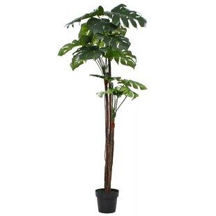 Floor Monstera Plant In Pot Image
