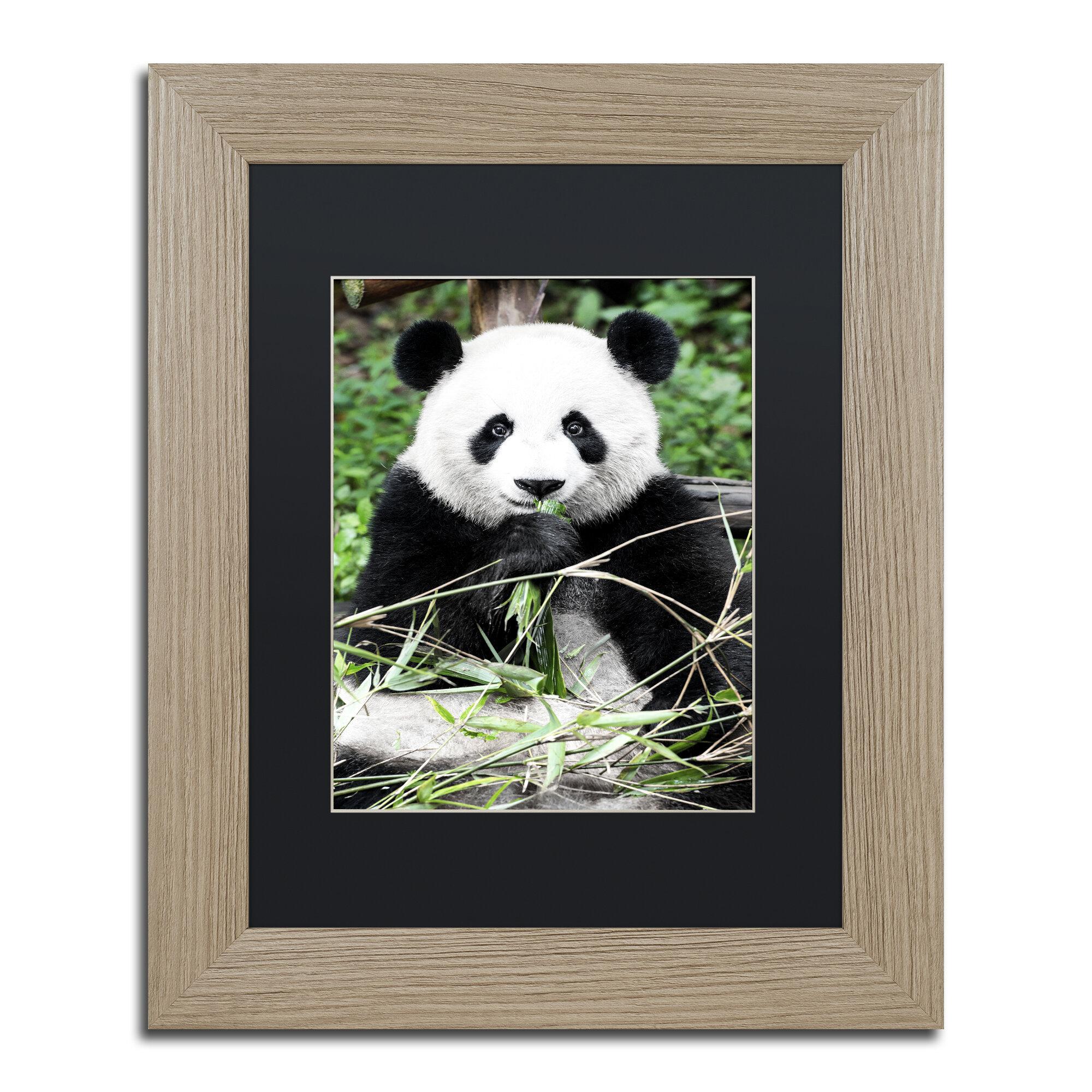 Trademark Art Giant Panda By Philippe Hugonnard Framed Photographic Print Wayfair