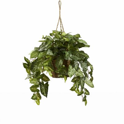 Alcott Hill Nepthytis Hanging Plant in Basket