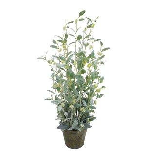 Salvia Floor Plant In Pot By The Seasonal Aisle