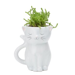 Yaritza Sweetie Cat Ceramic Pot Planter By Isabelle & Max