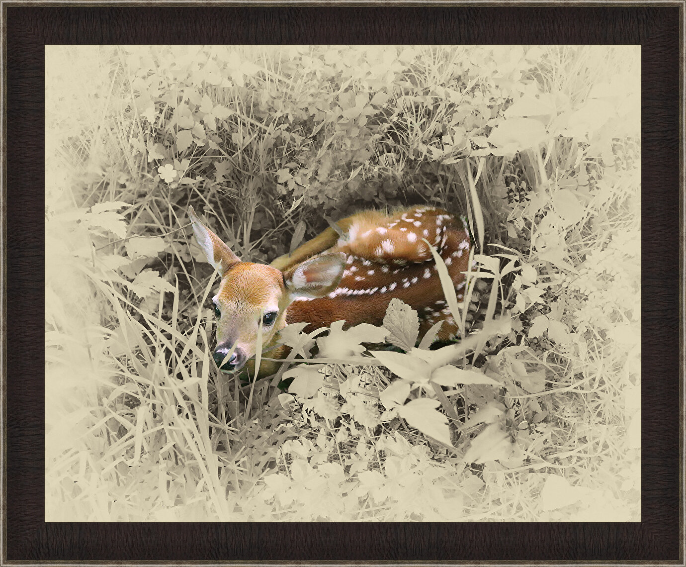 Millwood Pines Very Young Fawn Framed Photographic Print On Canvas Wayfair