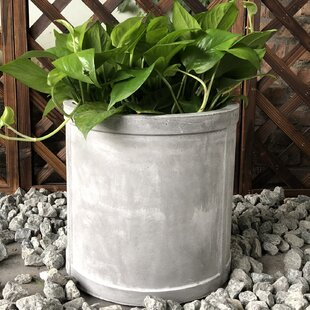 Williston Forge George Cylinder Pot Planter