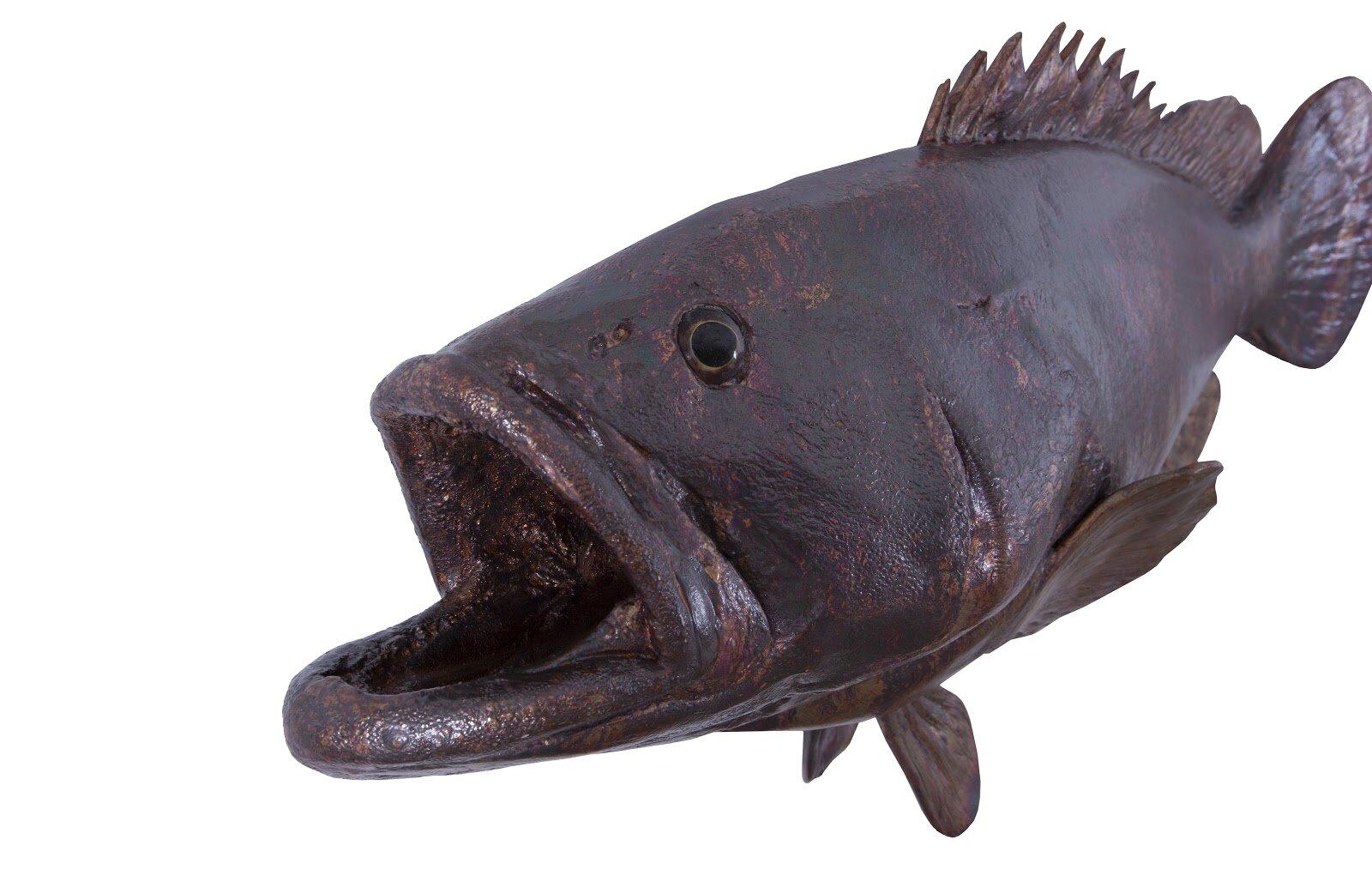 Phillips Collection Estuary Cod Fish Wall Décor Wayfair