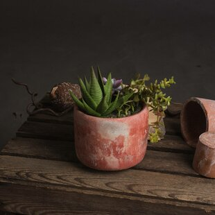 Floor Succulent Plant In Pot Image