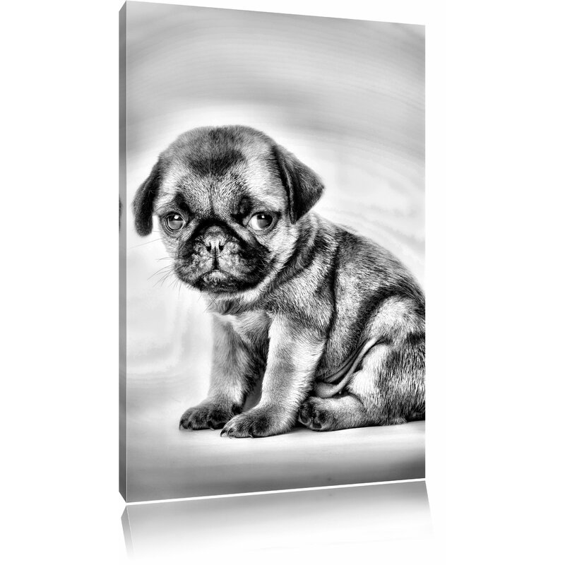 Small Pug Puppy Photographic Print on Canvas in Monochrome