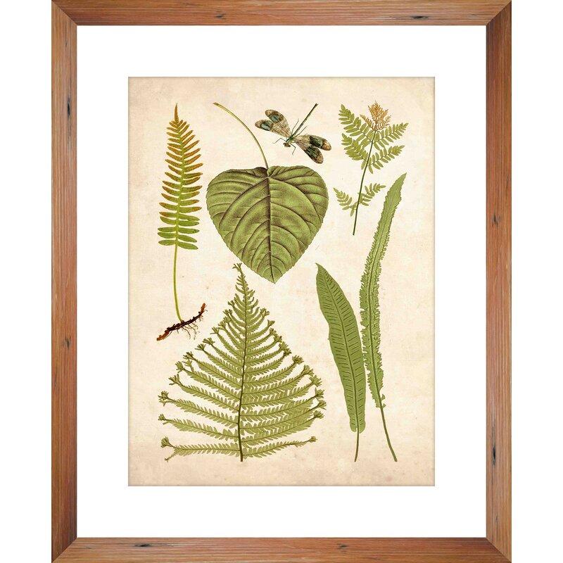 Ptm Botanical Display Picture Frame Graphic Art Print On Wood Wayfair