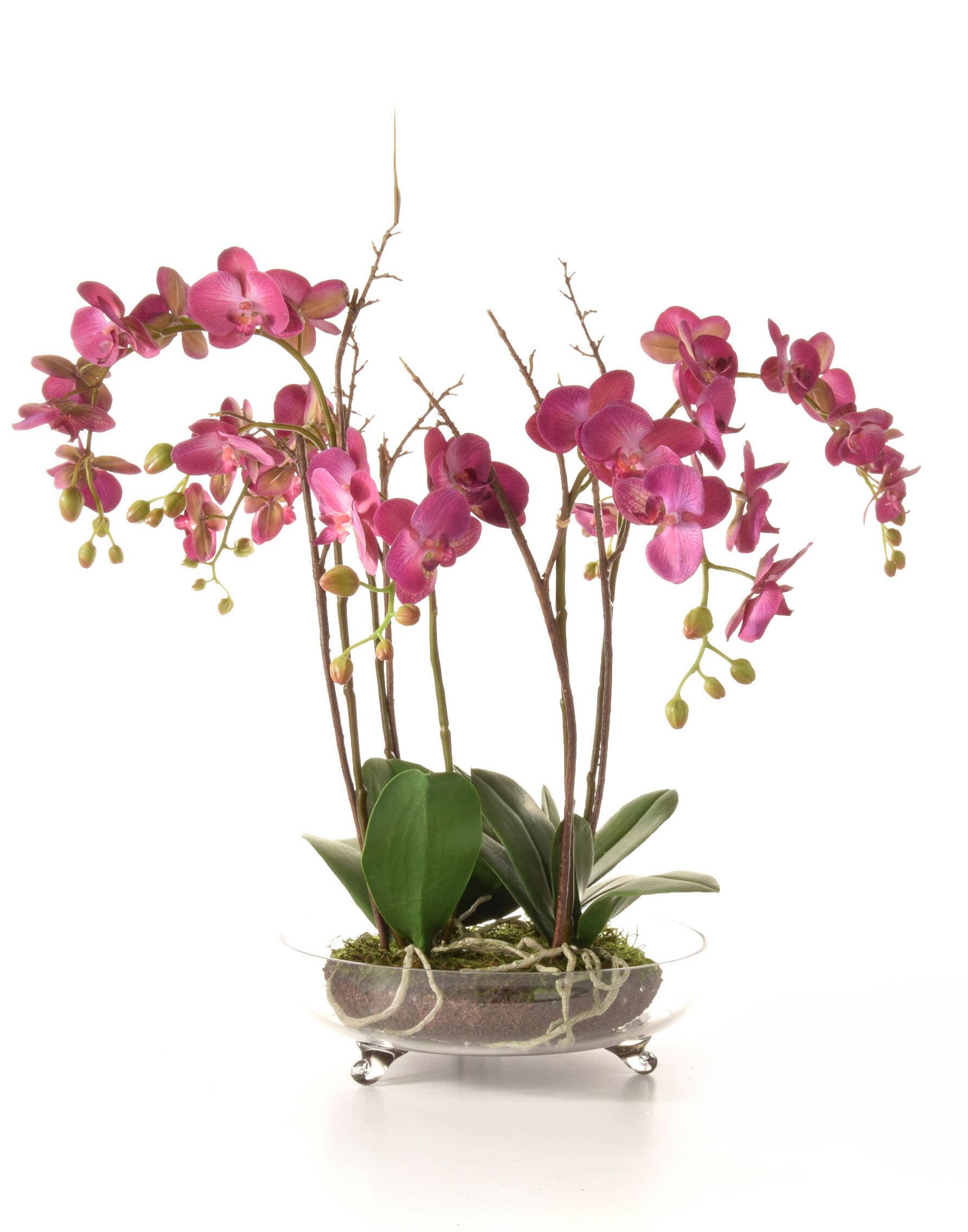 The Seasonal Aisle Artificial Orchids Floral Arrangements In Glass Bowl Reviews Wayfair Co Uk