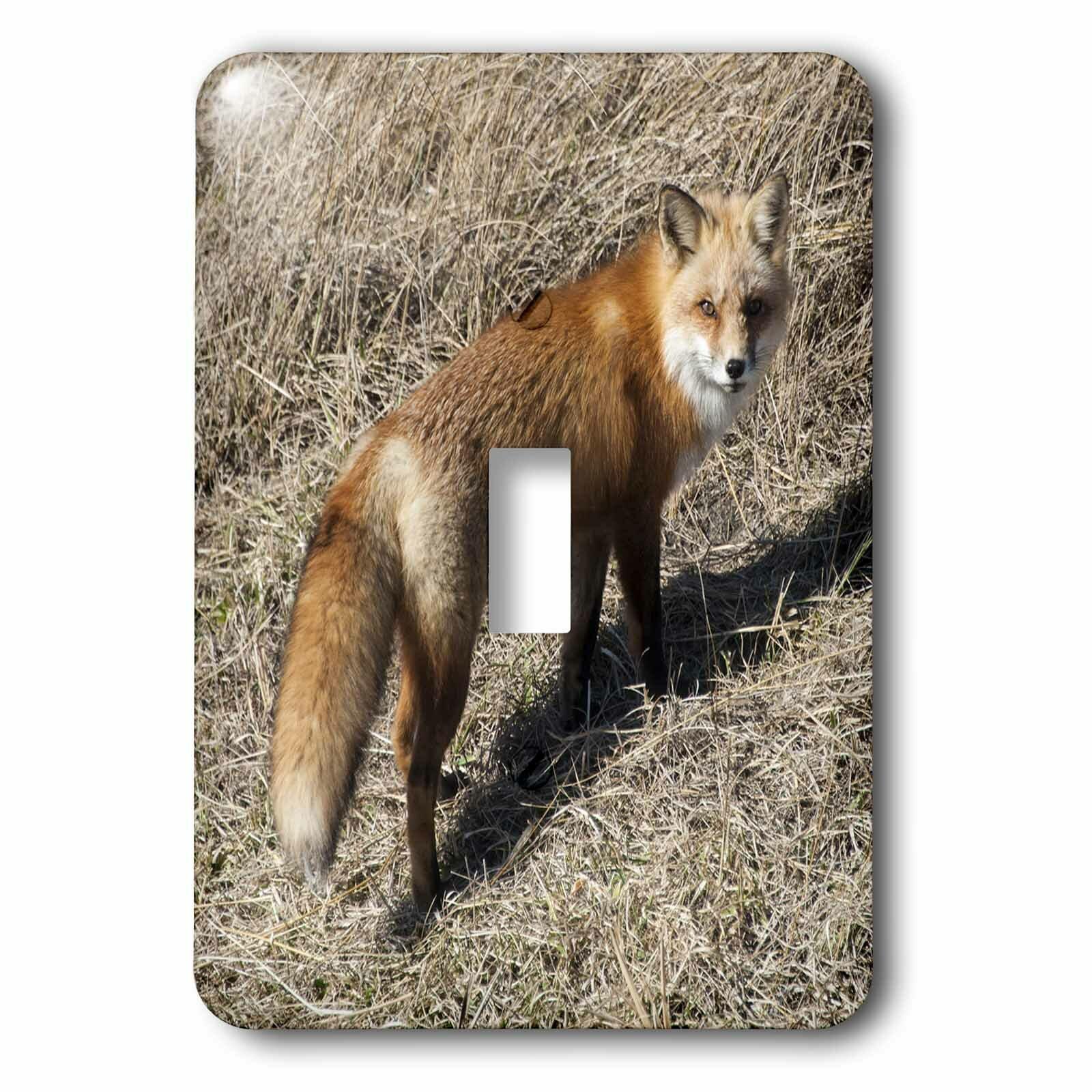 3drose Fox Walking Away 1 Gang Toggle Light Switch Wall Plate Wayfair