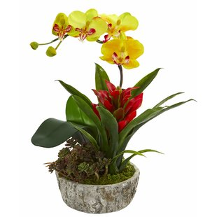 Artificial Bromeliad Succulent Orchid Floral Arrangement In Planter by Bay Isle Home Discount