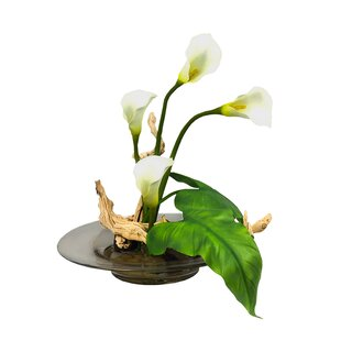 stylist lily house plant. Calla Lilies Floral Arrangement in Vase Lily In  Wayfair