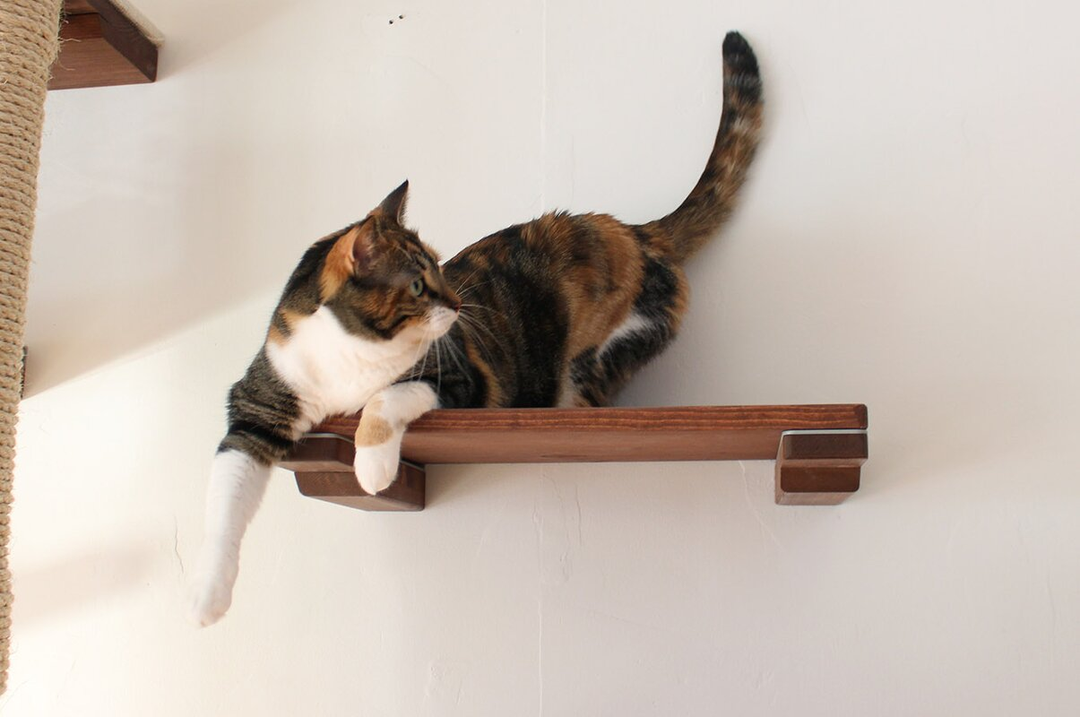 Catastrophicreations 3 cat mod shelf handcrafted elevated wall 3 cat mod shelf handcrafted elevated wall mounted 3 piece perch set for playing reviewsmspy