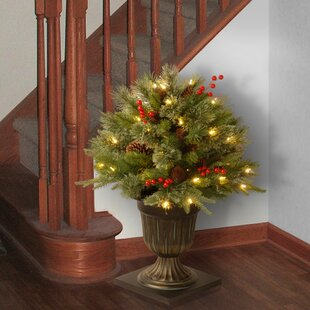 porch bush foliage topiary in decorative urn - Decorating Front Porch Urns For Christmas