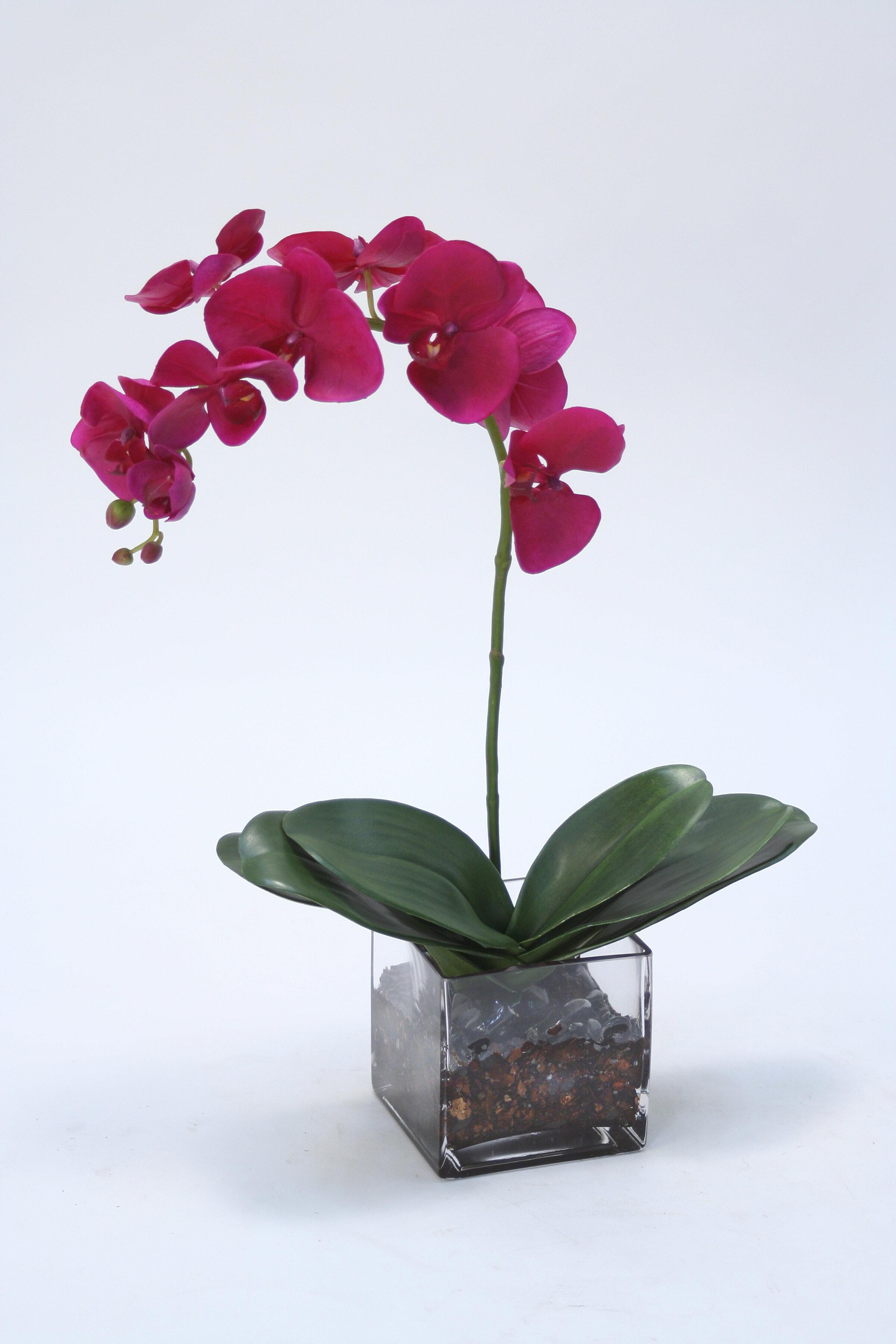 Everly Quinn Phalaenopsis Orchids Floral Arrangement In Vase Wayfair