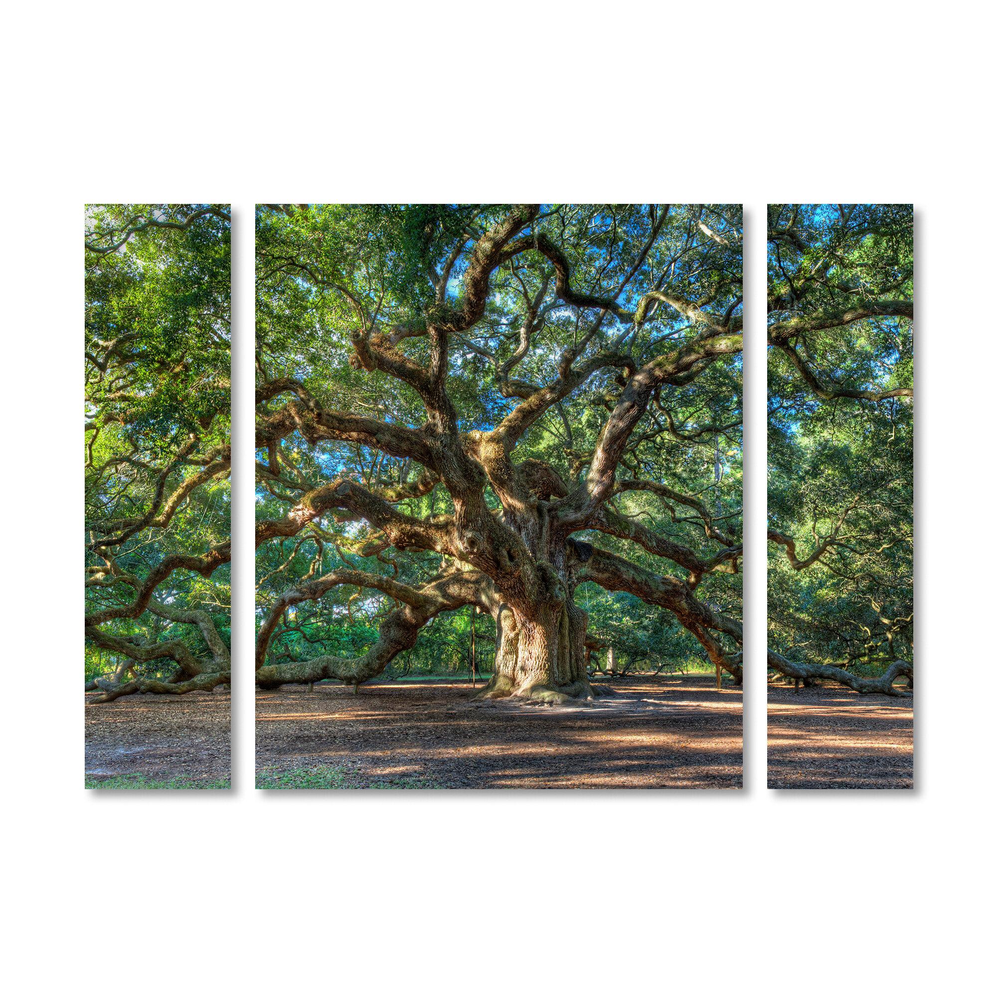 Charlton Home Angel Oak Charleston 3 Piece Photographic Print On Wred Canvas Set Reviews Wayfair