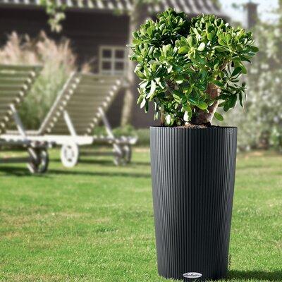 Self Watering Planters You Ll Love In 2020 Wayfair