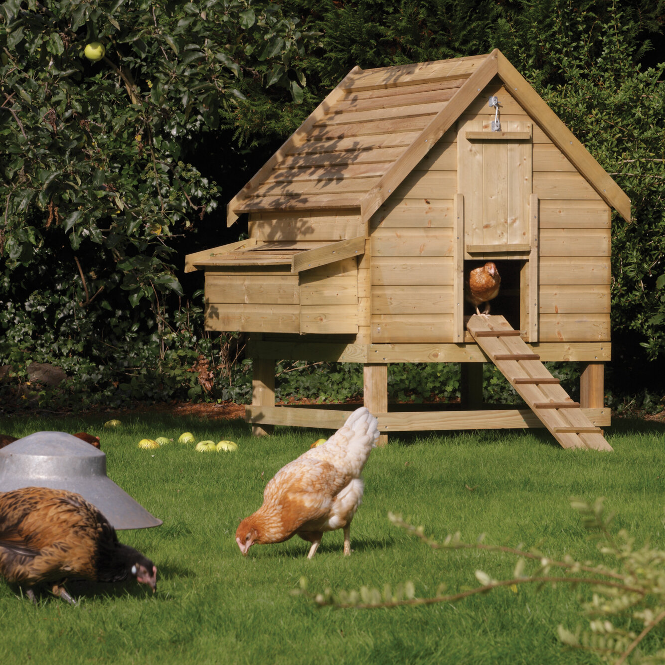 access hutches coop with chicken estate suits somerzby in products hutch walk large