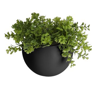 Cottrell Ceramic Wall Planter By Freeport Park