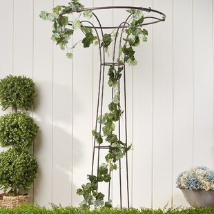 Birch Lane™ Flared Iron Trellis