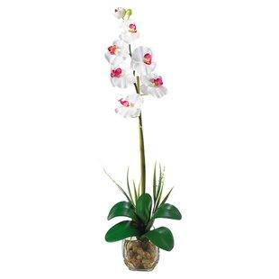 Single silk flowers wayfair liquid illusion single phalaenopsis silk orchid flower mightylinksfo