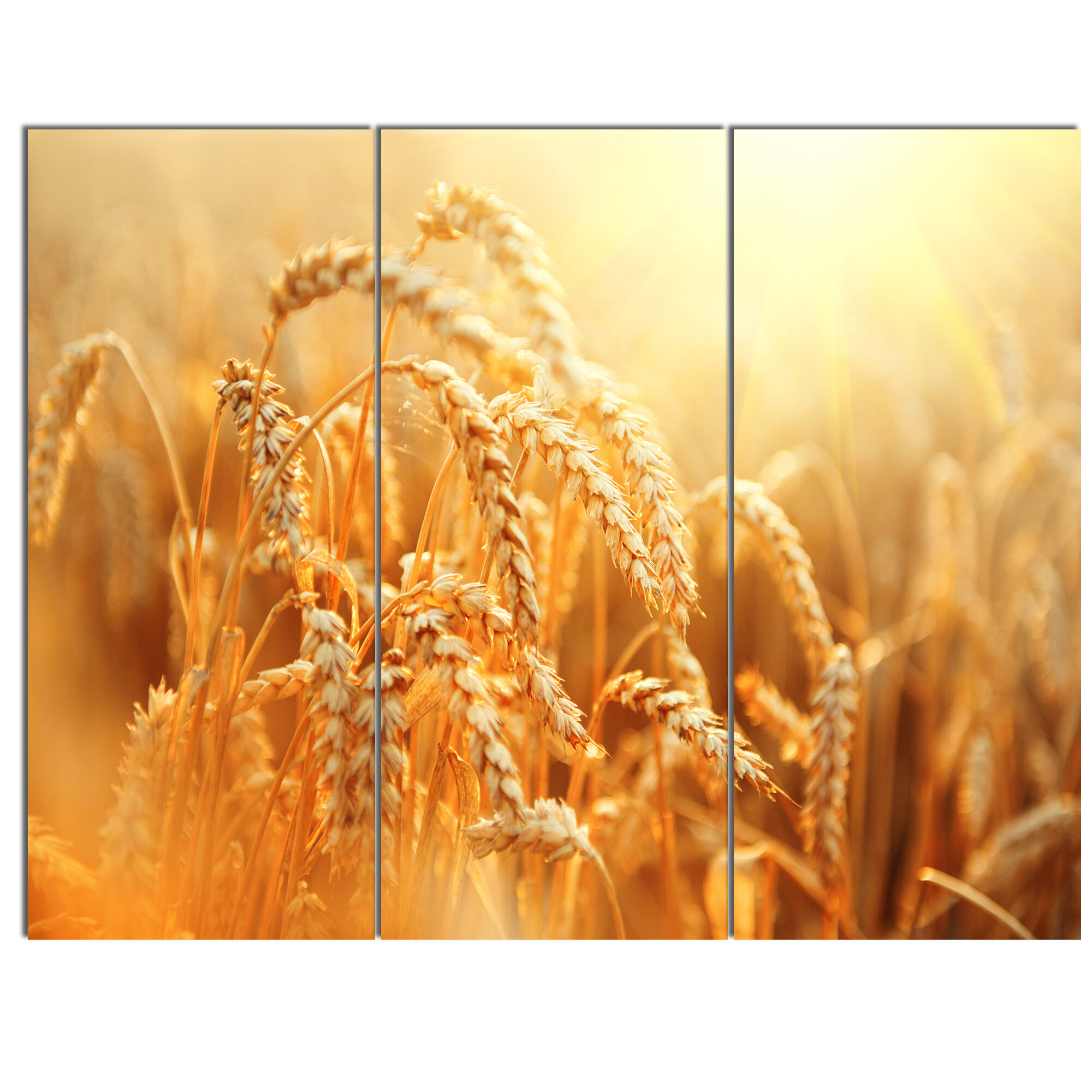 Wheat ear 3f 3 pieces