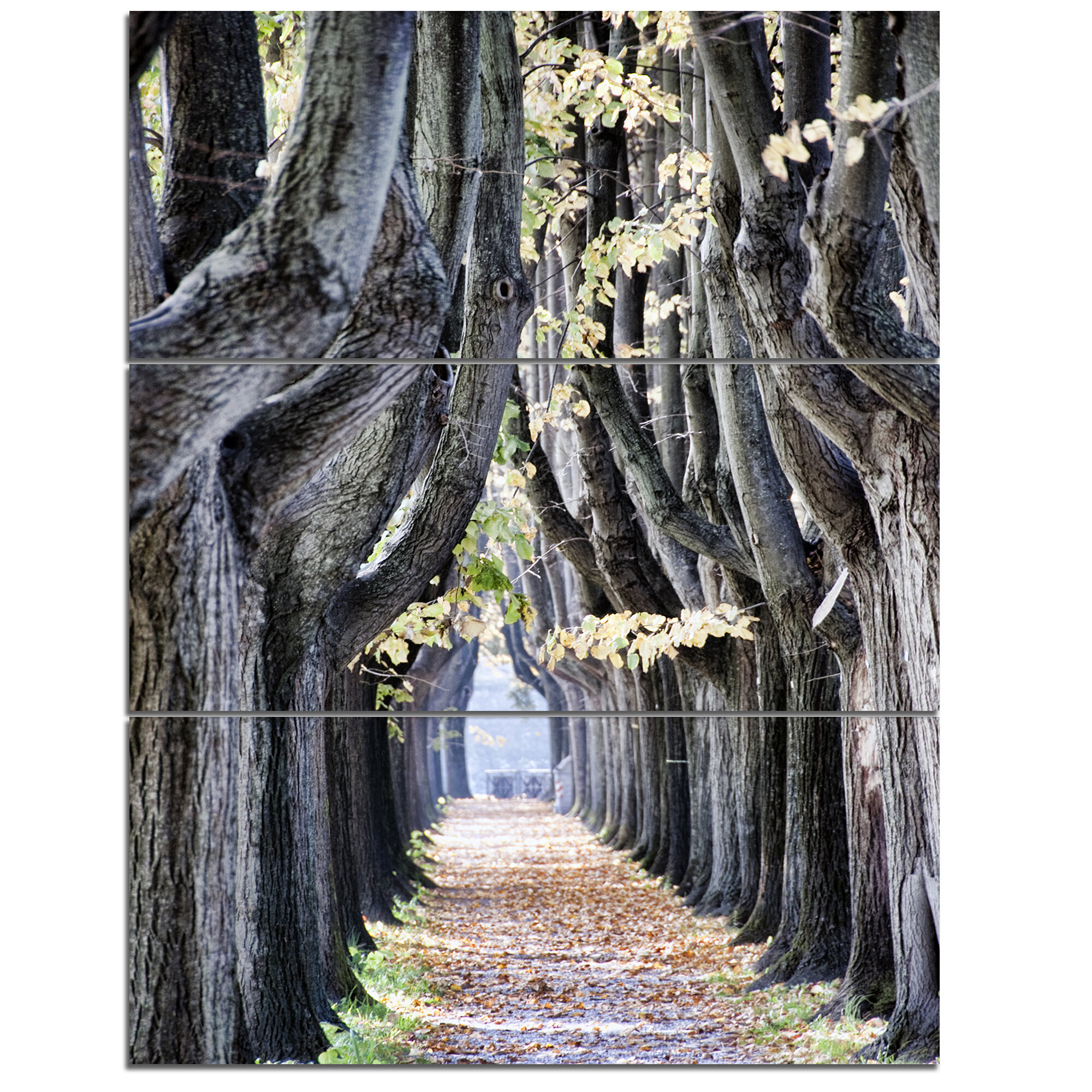 Designart Tree Outside Lucca Italy 3 Piece Wall Art On Wrapped Canvas Set Wayfair