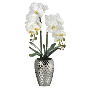 Orchid Floral Arrangement in Decorative Vase