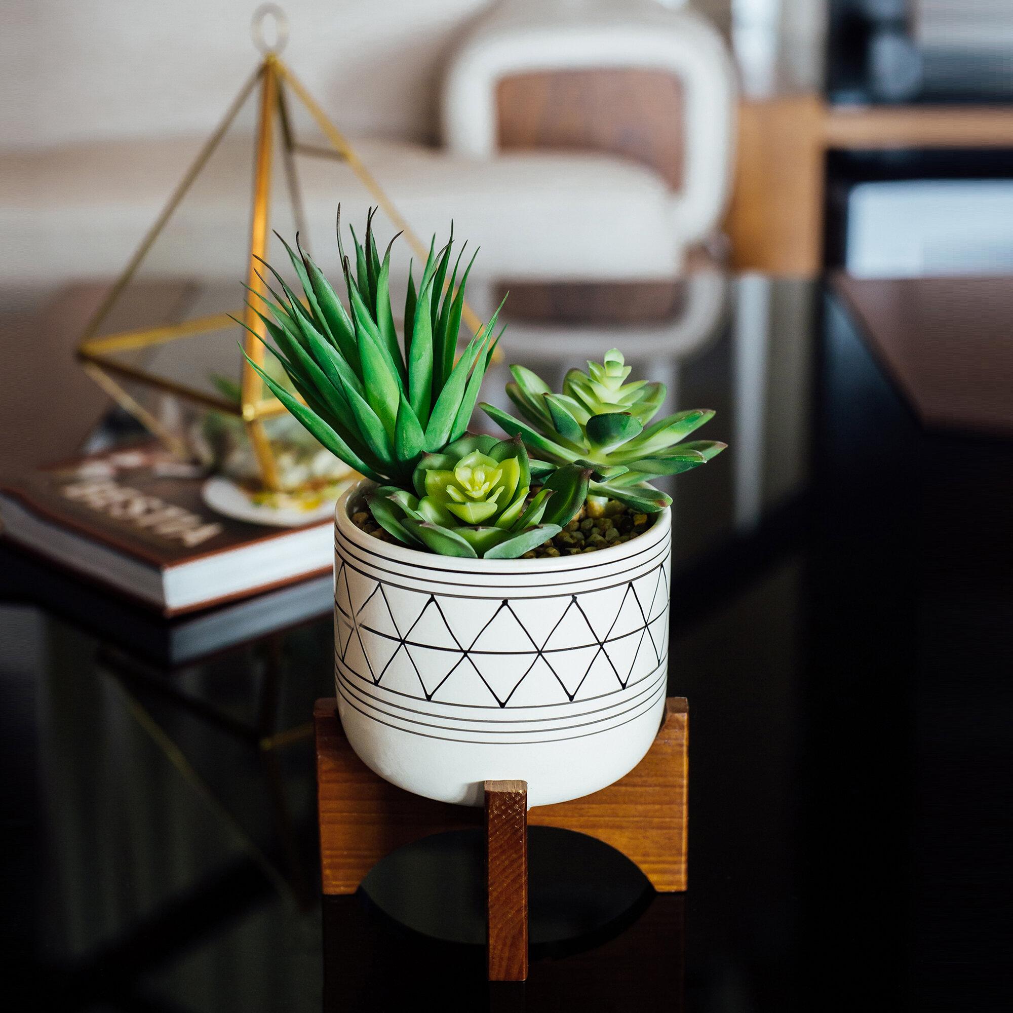Primrue Cactus Succulent In Pot Reviews Wayfair