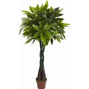 Modern & Contemporary Indoor Pots For Plants | AllModern