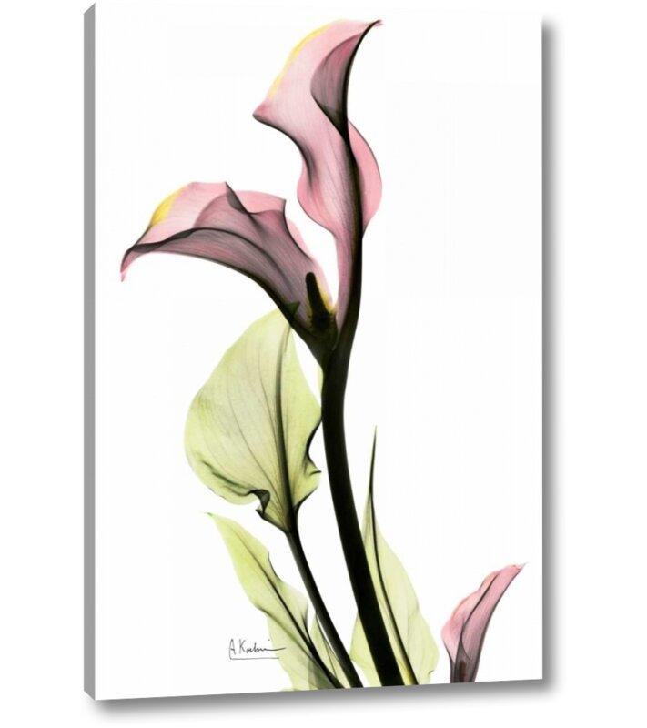 Bay Isle Home Calla Lily In Pink By Albert Koetsier Giclee Art Print On Wrapped Canvas Wayfair