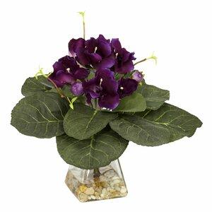 Gloxinia Desk Top Plant in  Decorative Vase