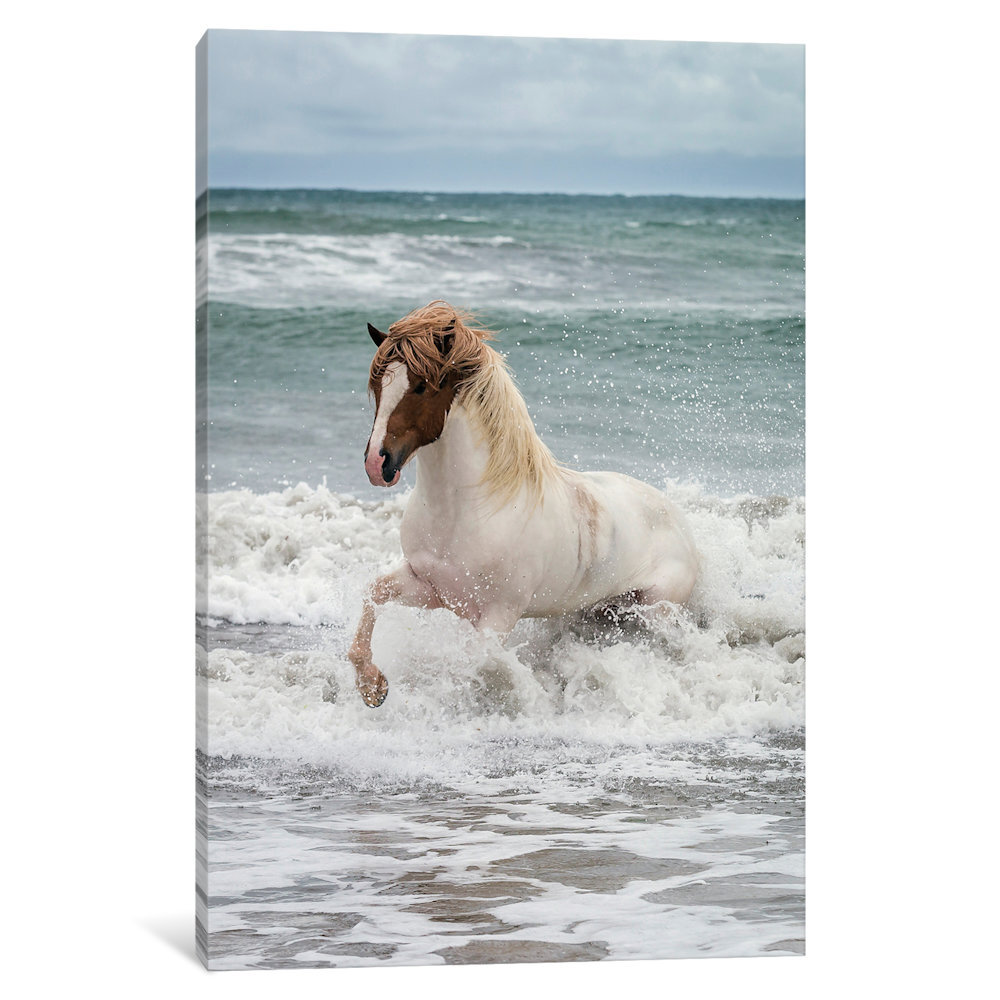 Horse Photographic Prints And Posters Wall Art You Ll Love In 2021 Wayfair