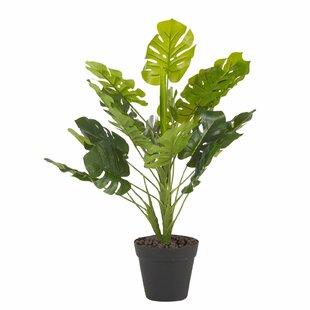 Foliage Plant In Planter Image