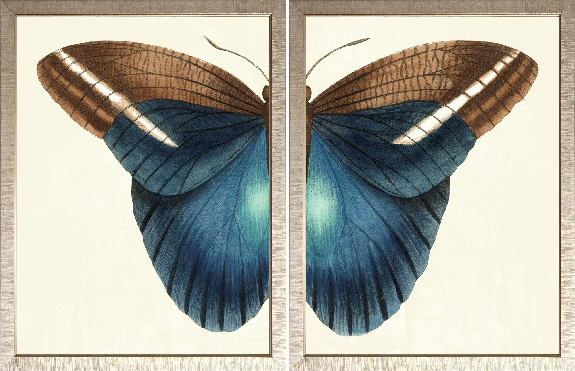 Art Virtuoso Butterfly Duo 2 Piece Picture Frame Graphic Art Print Set On Paper Perigold