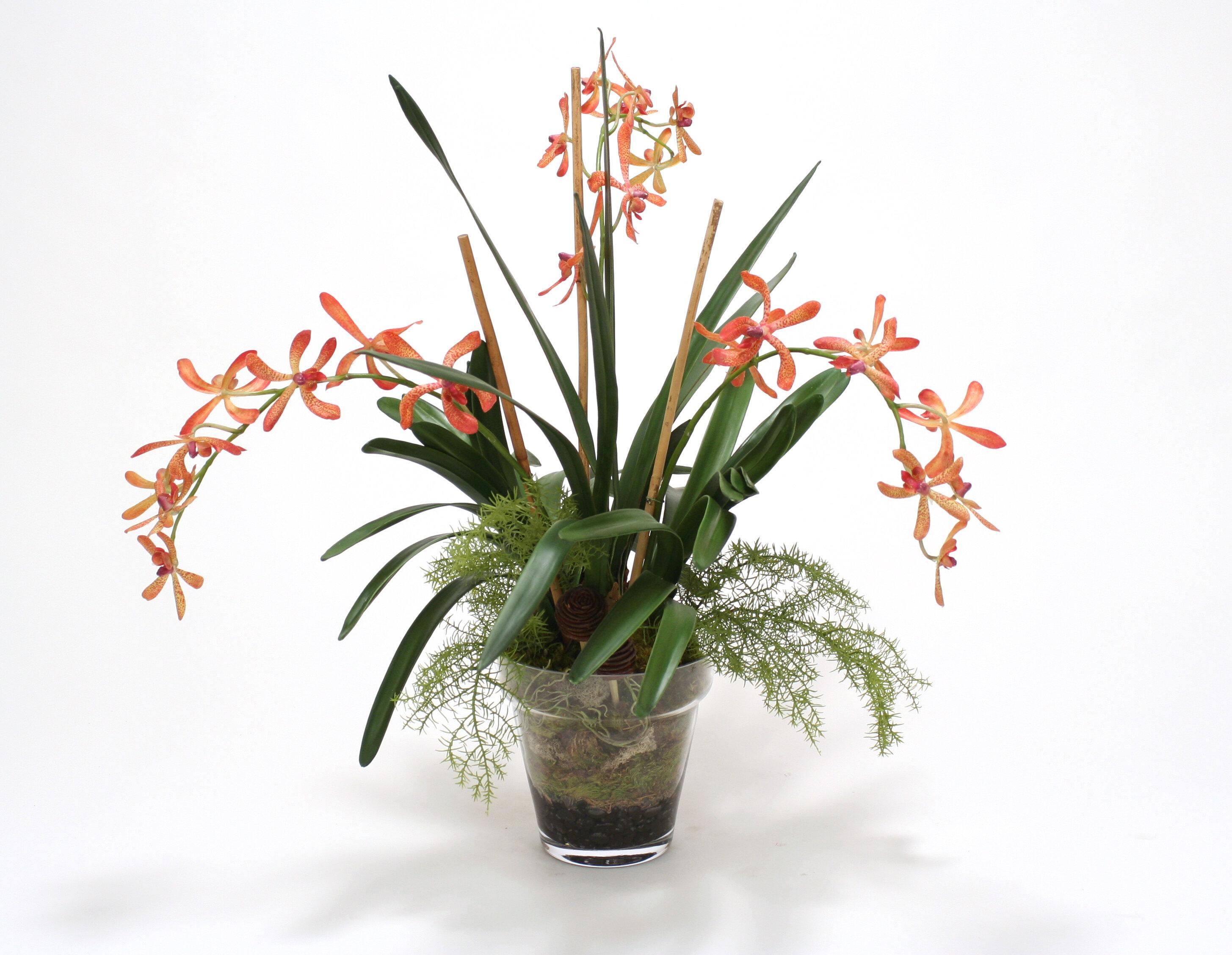 Distinctive Designs Orange Vanda Orchid With Orchid Foliage In Glass Flower Pot Wayfair