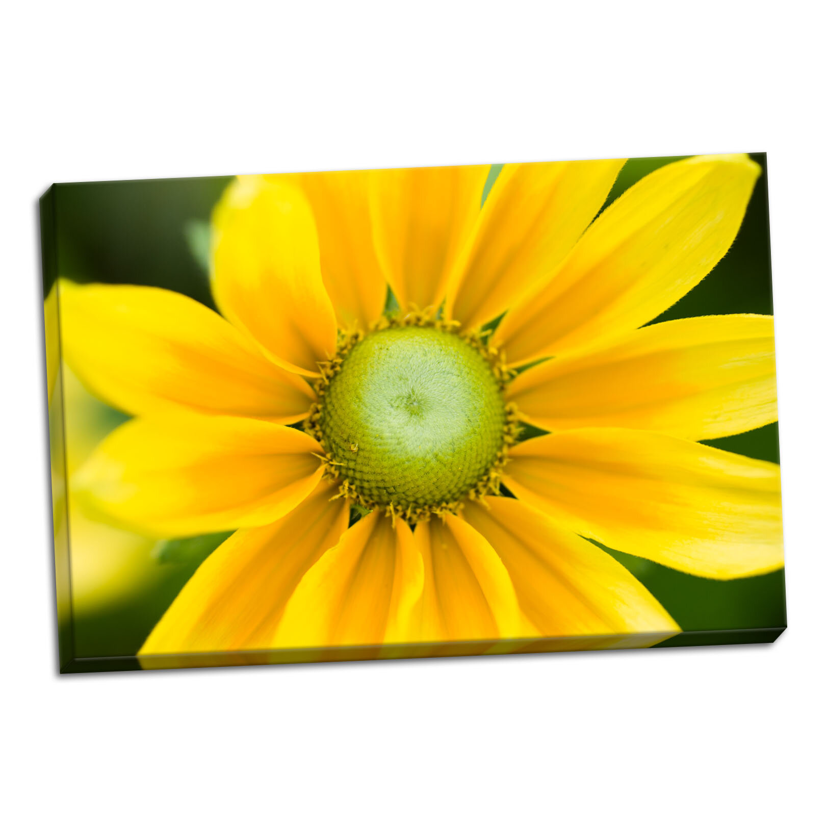 Winston Porter Yellow Cone Flower Ii Photographic Print On Wrapped