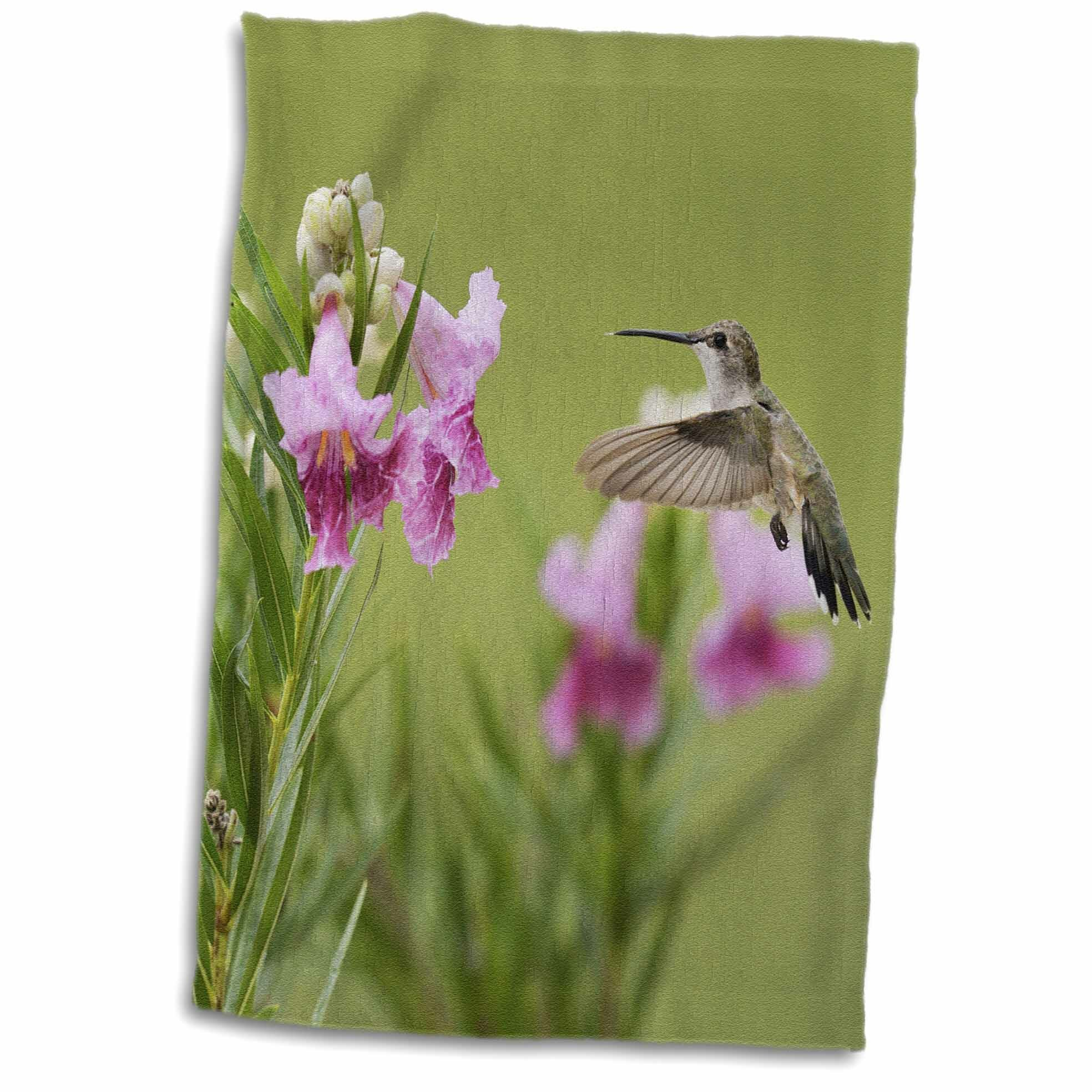 East Urban Home Kailey Ruby Throated Hummingbird At Desert Willow Hill Country Texas Hand Towel Wayfair
