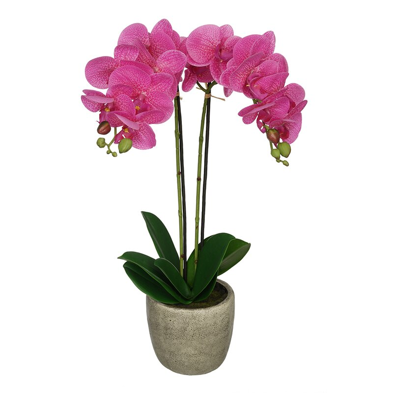 Phalaenopsis Orchid Artificial Accent